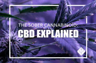 The Sober Cannabinoid: CBD Explained