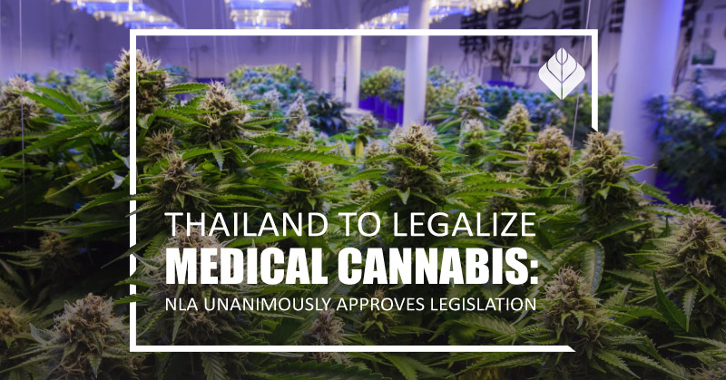 Thailand to legalize medical cannabis: NLA unanimously approves legislation